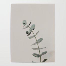 Stretch: minimalist botanical eucalyptus Poster