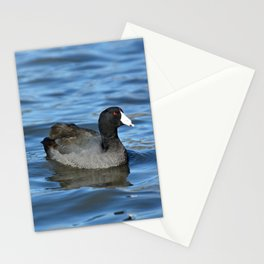American Coot Stationery Cards