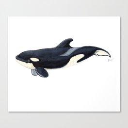 Baby orca Canvas Print