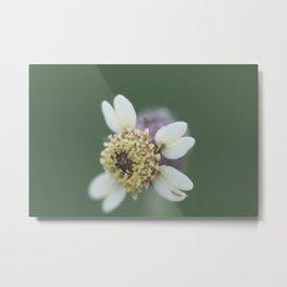 Old Flower Metal Print