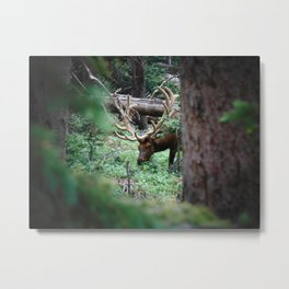 Naturally undisturbed. Metal Print