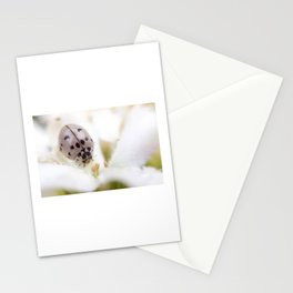 Gray Lady Stationery Cards