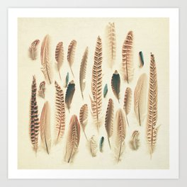 Found Feathers Art Print