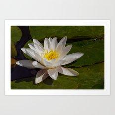 The Last Lily Art Print