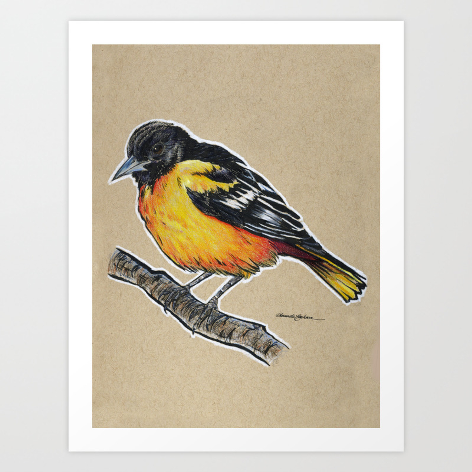 State Bird Series Maryland Baltimore Oriole Art Print By Theartingsofme Society6