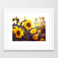 sunflowers Framed Art Prints featuring Sunflowers by elle moss