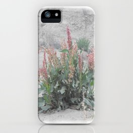 Desert Flora iPhone Case