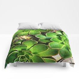 3 Succulents Comforters