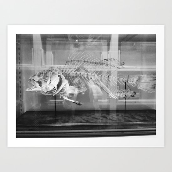 Fish Skeleton - Harvard Museum of Natural History Art Print