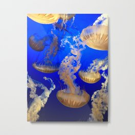 Sea Nettles Metal Print
