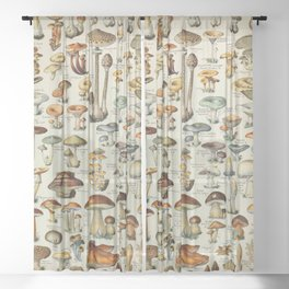 Mushrooms Vintage Scientific Illustration French Language Encyclopedia Lithographs Educational Sheer Curtain