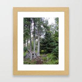 Four Cedars Framed Art Print