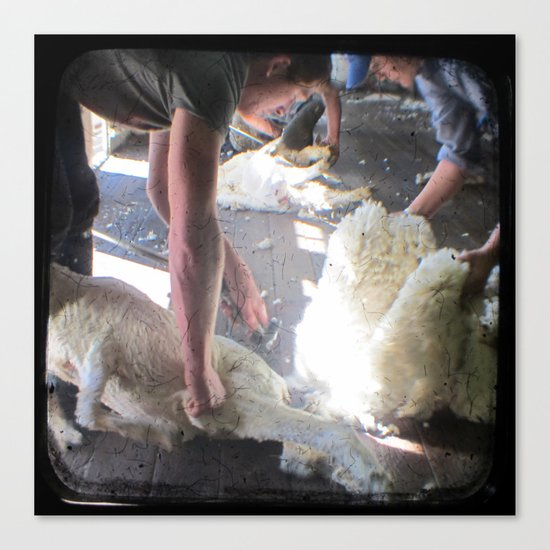 The Shearer - Through The Viewfinder - (TTV) Canvas Print