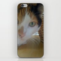 ginger iPhone & iPod Skins featuring Ginger by A.S.M Designs