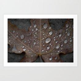 Water Droplet on Leaf Art Print