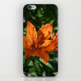 Chinese Lily flower iPhone Skin