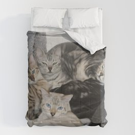 Bengal Cat Kitty Pile  Comforters