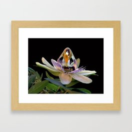 The opening of a passion Framed Art Print