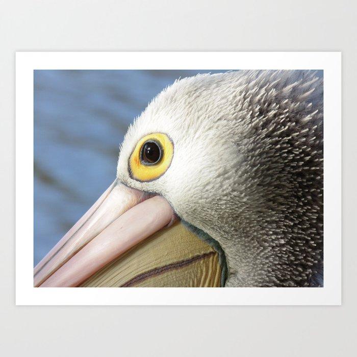 Australian Pelican #1 Art Print