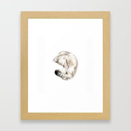 Cat - British Shorthair Framed Art Print
