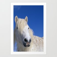 WHITE HORSE AND BLUE SKY Art Print