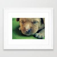 puppy Framed Art Prints featuring Puppy by Luiza Lazar