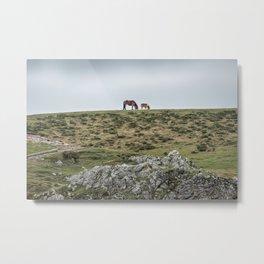 Asturcon, Asturian pony Metal Print
