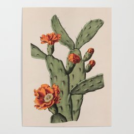 Botanical Cactus Poster