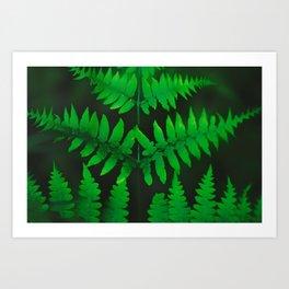 FERNED Art Print
