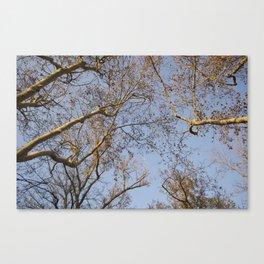 Looking up at trees Canvas Print