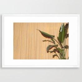 Curtain and Plant Framed Art Print