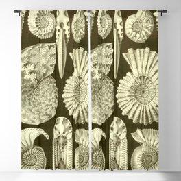 Naturalist Ammonites Blackout Curtain