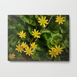 Creeping Wildflowers Metal Print