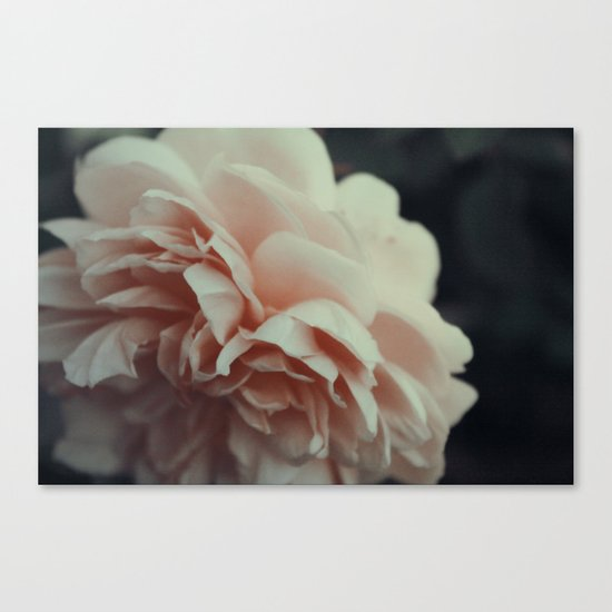 Wildeve Rose No. 2 Canvas Print
