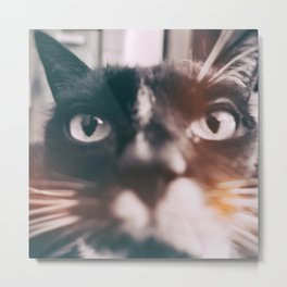 photo cat Jagoda #photo #cat Metal Print