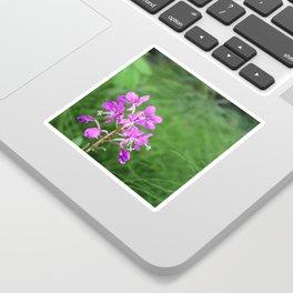 Fireweed Wildflower Sticker