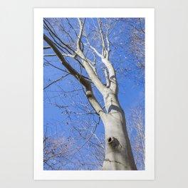 Mason Neck Birches Art Print