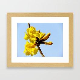 """Golden Trumpets"" by ICA PAVON Framed Art Print"