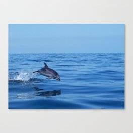 Spotted dolphin jumping in the Atlantic ocean Canvas Print