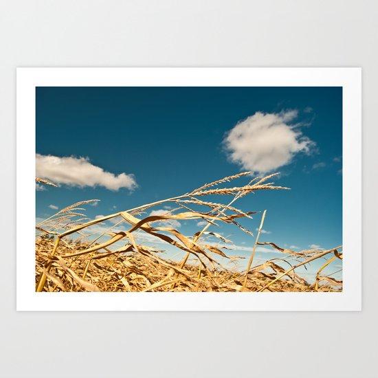 Corn Stalk Art Print