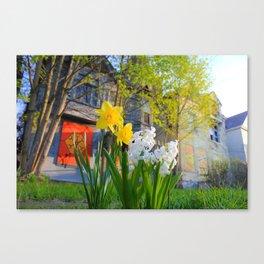 Daffodils and Dilapidation Canvas Print