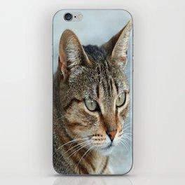 Stunning Tabby Cat Close Up Portrait iPhone Skin