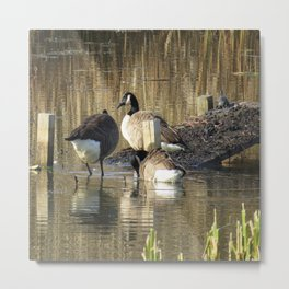 Ducks at John Heinz Wildlife Reguce Metal Print