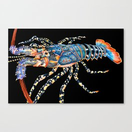 Rock Lobster Canvas Print