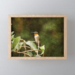 Ruby Throated Hummingbird Framed Mini Art Print