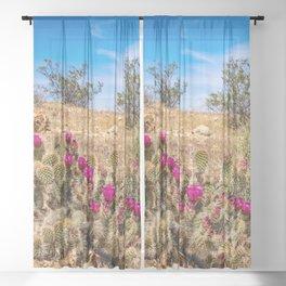 Desert Cacti in Bloom - 3 Sheer Curtain