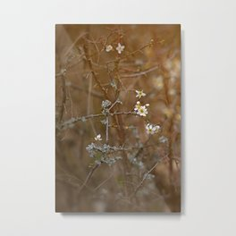 first blossoms Metal Print
