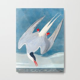 Arctic Tern James Audubon Vintage Scientific Illustration American Birds Metal Print