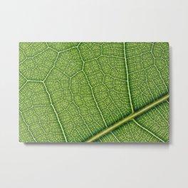 Macro Leaf Veins Metal Print