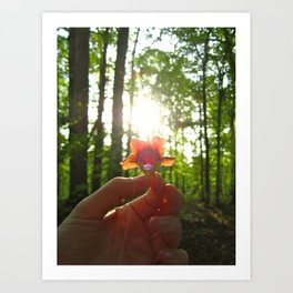 Nature Rays Art Print